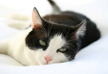 3 ways rescued cats are the best teachers