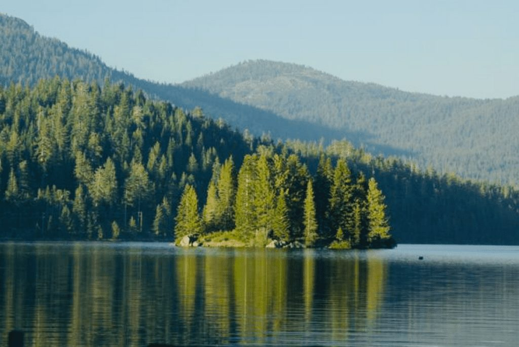 an island in a lake with tall green pine trees