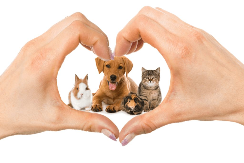 a dog cat and rabbit inside a heart made with two hands together