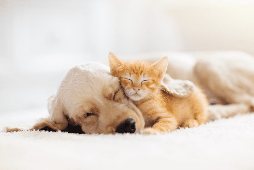 dog and cat laying on each other