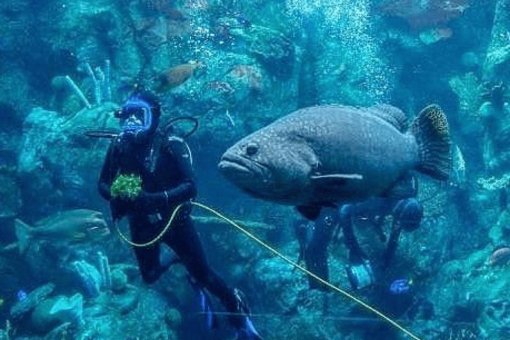 a diver with a fish