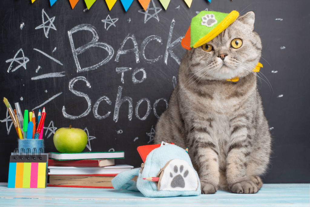 A cat wearing a hat next to school supplies and a chalkboard saying back to school