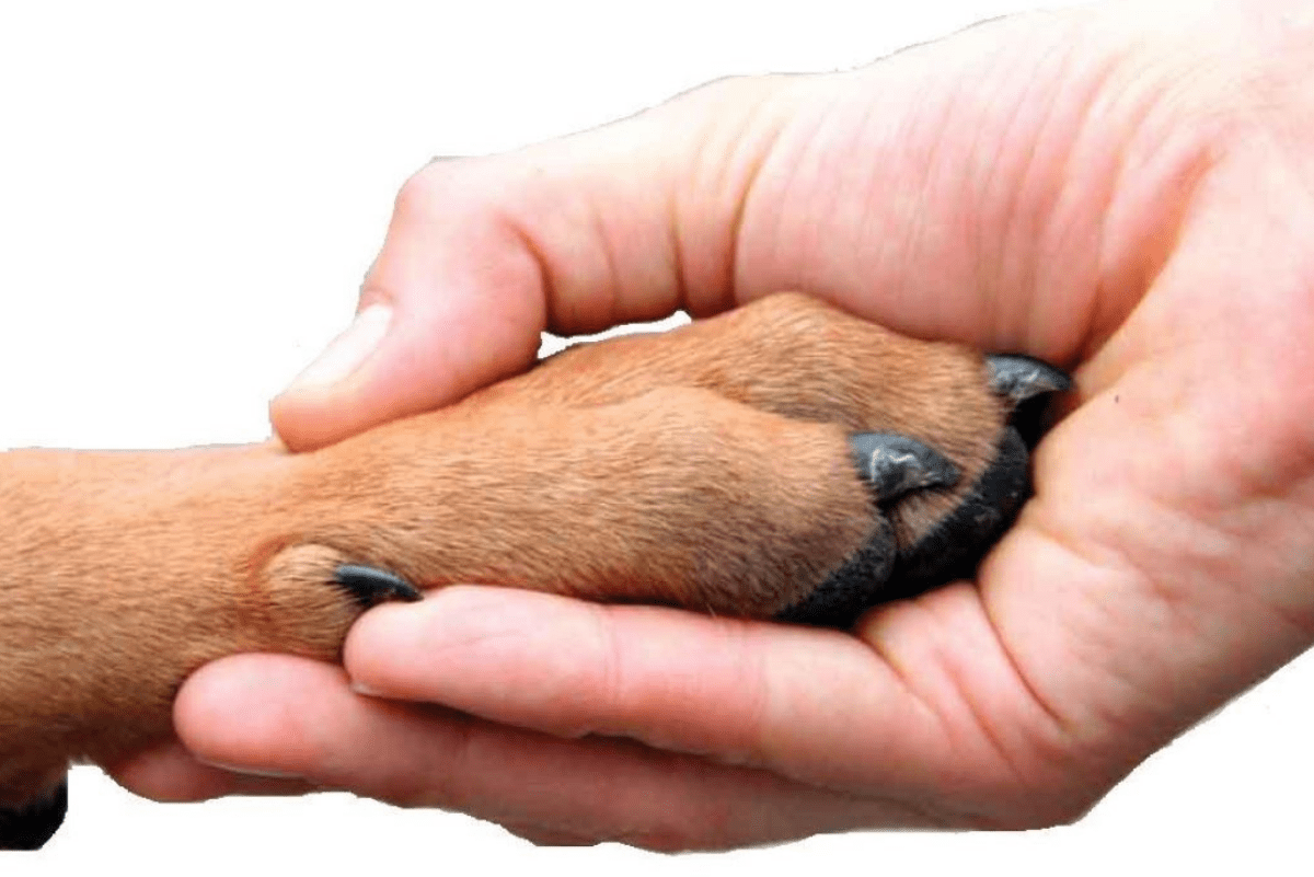 a human hand reaching out and holding a brown dog paw