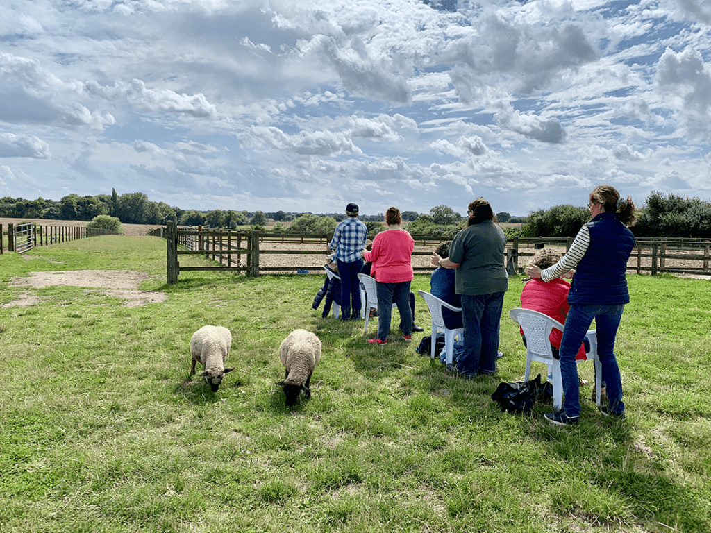 Learning to Let Animals Lead® is Not Always Easy